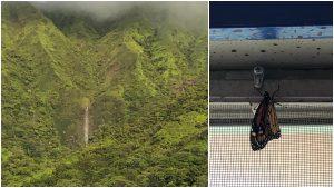 Alakai O Kauai campus waterfall butterfly pavilion